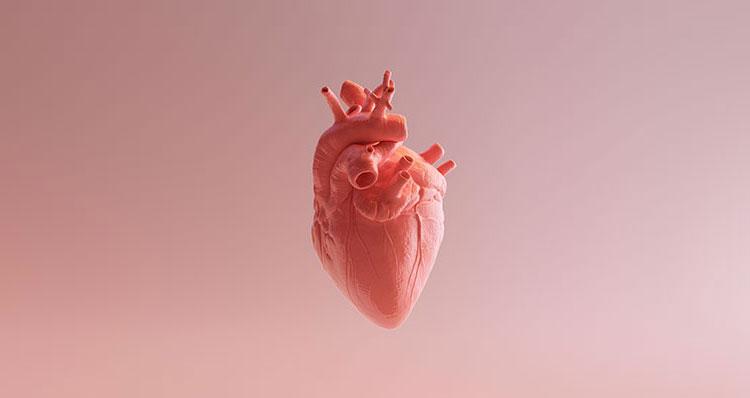 Cuanta-sangre-bombea-nuestro-corazon