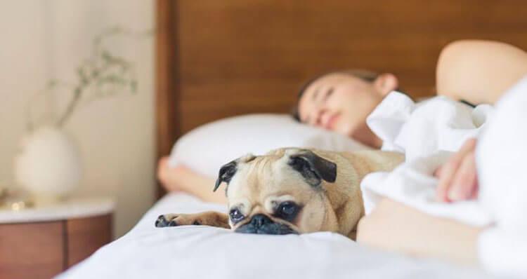 De-donde-procede-la-palabra-siesta