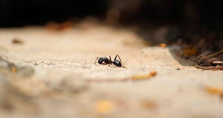 Las-hormigas-tambien-se-jubilan