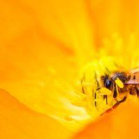Las-abejas-entienden-las-matematicas