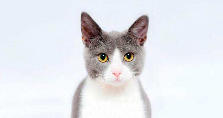 Por-que-se-dice-que-los-gatos-tienen-7-vidas