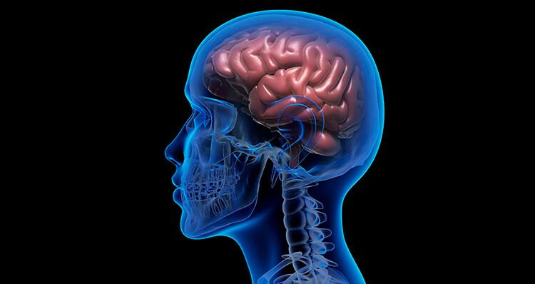 Un-cerebro-más-pequeño