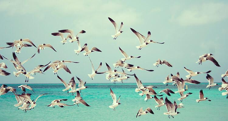 las-aves-pueden-predecir-catastrofes-naturales