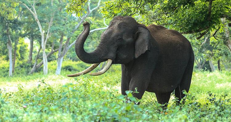 los-elefantes-pueden-predecir-catastrofes-naturales
