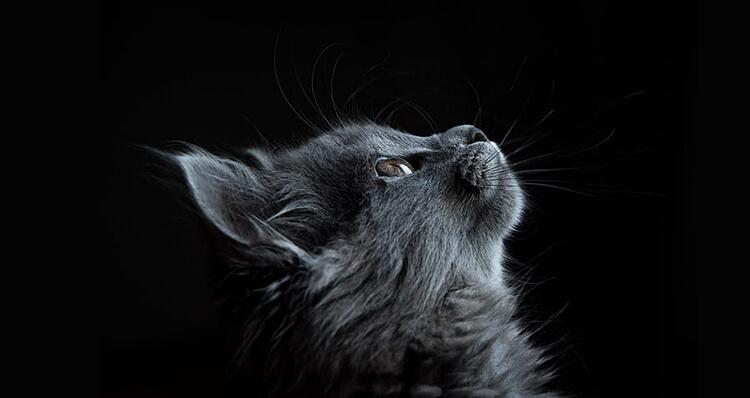 los-gatos-predicen-catastrofes-naturales