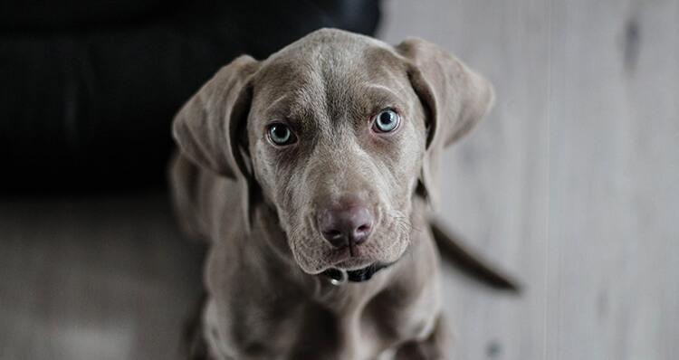 los-perros-pueden-predecir-catastrofes-naturales
